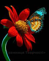 Картина по номерам 40х50 Бабочка на красном цветке (GX21524), фото 1