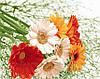 Картина по номерам 40х50 Прекрасные герберы (GX23592)