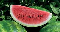 Семена арбуза Арашан F1 (ВДЛ 5003) 1000 семян Syngenta