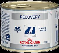 Консервы для кошек Royal Canin Recovery корм влажный в период восстановления 195 г