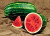 Семена арбуза Селебрейшн F1 1000 семян Syngenta