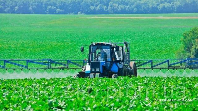 В Україні зареєстровано петицію щодо заборони використання інсектицидів на основі Імідаклоприду