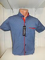 Рубашка мужская SENATO полу-батал, короткий рукав, узор, стрейч котон 18.06 002 \ купить рубашку оптом.