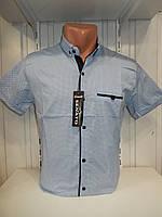 Рубашка мужская SENATO полу-батал, короткий рукав, узор, стрейч котон 18.06 005 \ купить рубашку оптом.