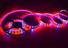 Светодиодная фитолента Foton SMD 5050 (60 LED/m) IP20 Premium, фото 3