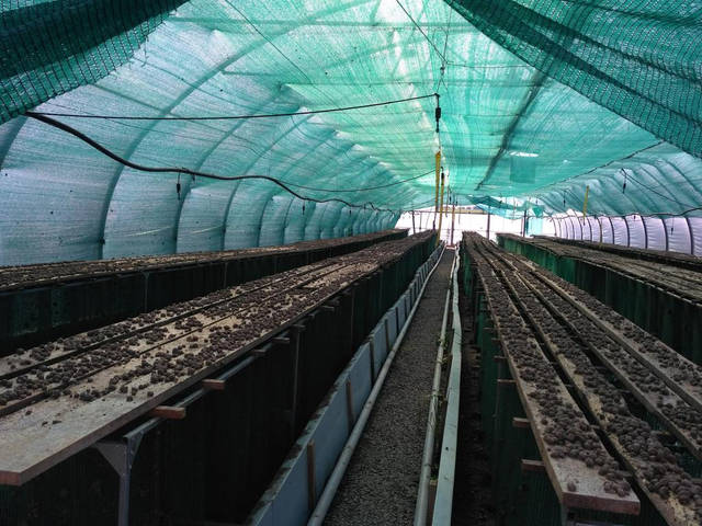 Так живуть равлики. Равлики живуть в відділеннях тих, що знизу, вилазять наверх й прикріплюються до дошок. а для того, щоб їх позбирати, потрібно перевернути дошку
