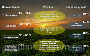 Фунгіцидний та інсектицидний захит посівів сої