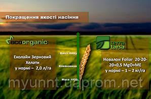 Підживлення у фазу формування зерна озимої пшениці ВВСН 71-75