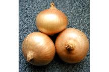 Озимый лук севок Августа 1кг Голландия