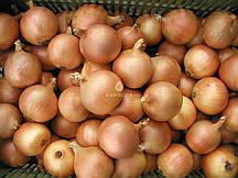 Озимый лук севок Люси 1кг Голландия