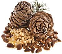 Польза кедровых орехов известна сибирякам очень давно.