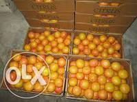 Аренда склада для апельсин,хурмы и фруктов