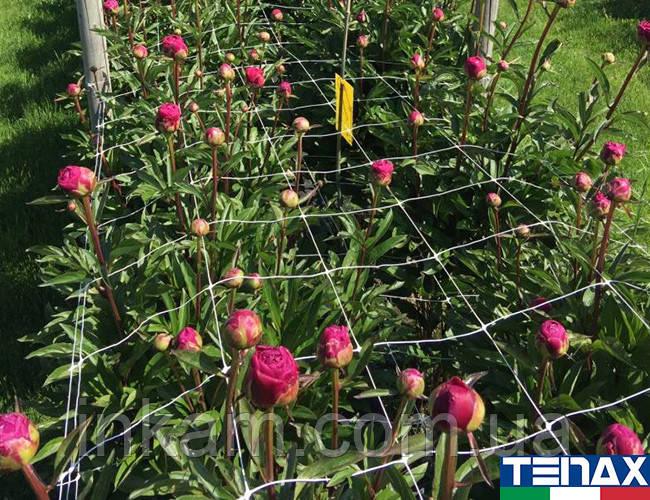 Сетка шпалерная для цветов Ортинет 10FGPO 1,12х1000 м (Tenax - Италия)