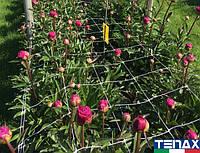 Сетка шпалерная для цветов Ортинет 10FGPO 1,12х1000 м (Tenax - Италия), фото 1