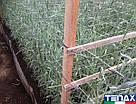 Сітка шпалерна для квітів Ортинет 10FGPO 1,12х1000 м (Tenax - Італія), фото 4
