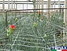 Сітка шпалерна для квітів Ортинет 10FGPO 1,12х1000 м (Tenax - Італія), фото 5