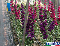 Сетка шпалерная цветочная Ортинет 7FG 1,02х1000 м (Tenax - Италия), фото 1