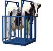 Весы для взвешивания животных 1х1.5 метра