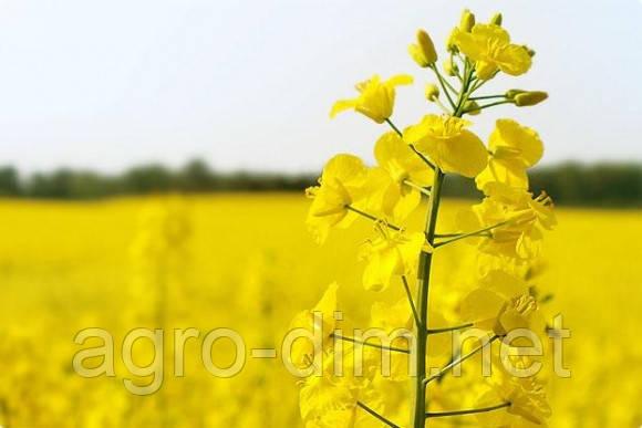 Семена рапса Селавик, Seed Grain Company, фото 2