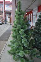 Сосна зелённая с белыми кончиками 1,5м