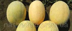 Семена дыни Ман F1 500 семян Syngenta