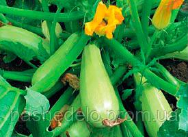 Семена кабачка Каризма F1 2500 семян Syngenta