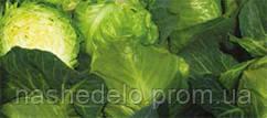 Семена капусты б/к Миррор F1 2500 семян Syngenta