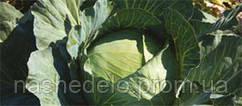 Семена капусты Агрессор F1 2500 семян Syngenta