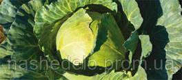 Семена капусты Браксан F1 2500 семян Syngenta