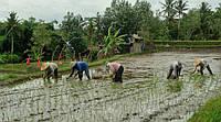 Интересные факты про сельское хозяйство
