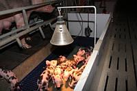 Инфракрасные лампы для обогрева животных и птиц, брудеры для ик ламп