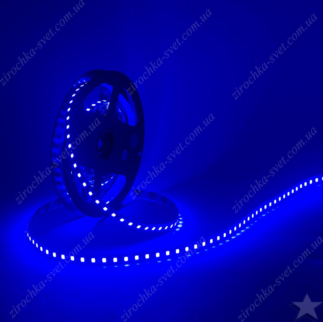 Светодиодная лента синяя 12в 120шт/м smd3528 IP20 9,6 Вт/м Motoko