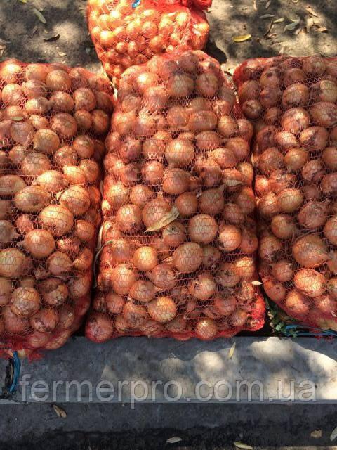 Семена лука Медуза  F1 250000 семянTakii Seeds
