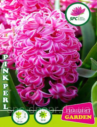 Гиацинт Pink Perl
