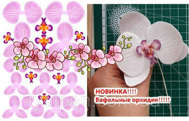 Вафельная картинка для вафельных цветов орхидея