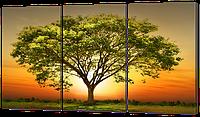 Модульная картина Дерево на закате