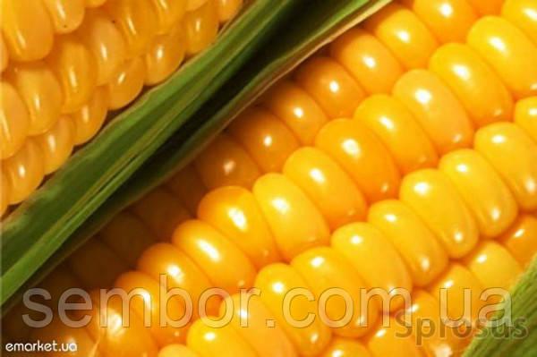 Кукуруза посевная НС 101