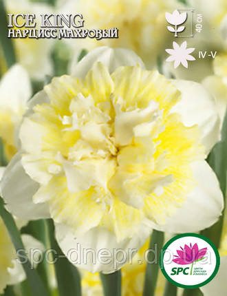 Нарцисс махровый Ice King, фото 2