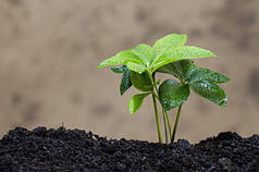 Почва и ее плодородность