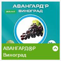 Авангард Р Виноград (5л)