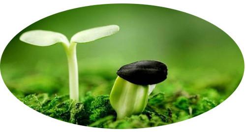 Протравители для семян, фото 1