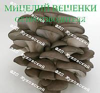 Мицелий вешенки зерновой (міцелій гливи зерновий)