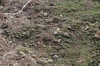 Позеленение грунта на грядке
