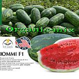 Семена, арбуз ЮММИ F1 / JUMMI F1, LARK SEEDS (США), 1000 семян, фото 4