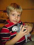 Жако птенцы (ручного докормления) 3,5 - 4 мес., фото 8