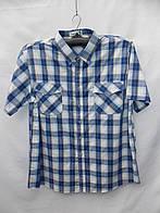 "Рубашка мужская в клетку батал (6XL-10XL) ""Lider"" RS2-1723"