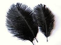 Перо страуса. Черное, от 15 до 23 см