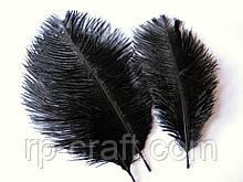 Перо страуса. Чорне, від 13 до 23 см