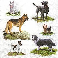 Салфетка декупажная Собаки 7528