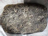 Левзея маралий корень